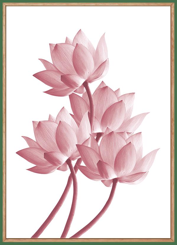 Quadro Flor de Lótus 2