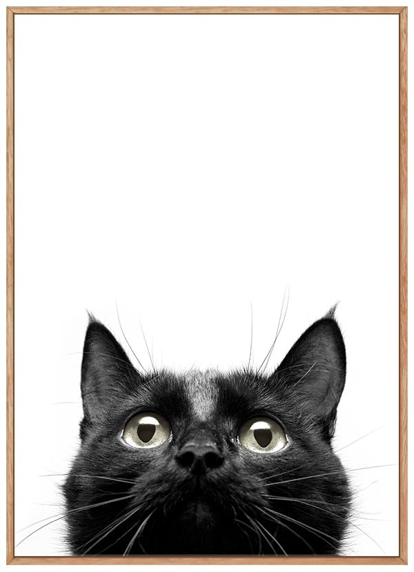 Quadro Gato Preto