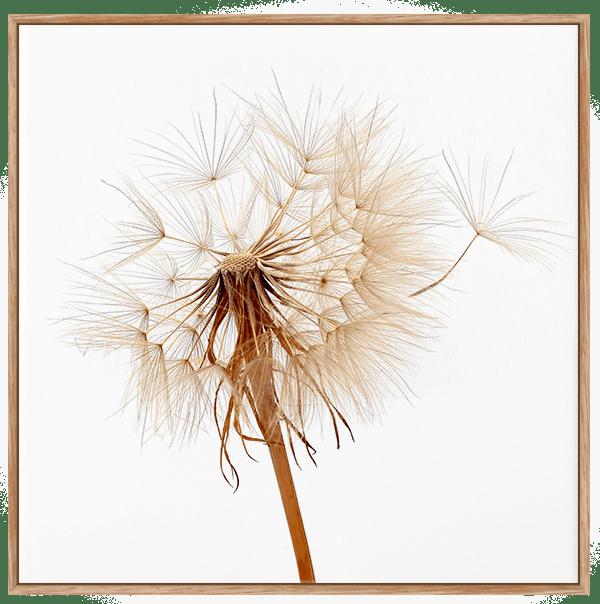 Quadro Decorativo Flor Dente de Leão 1