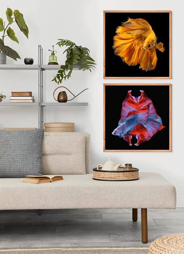 Quadros Decorativos Peixes Beta Dourado Vermelho Azul - Composição com 2 quadros