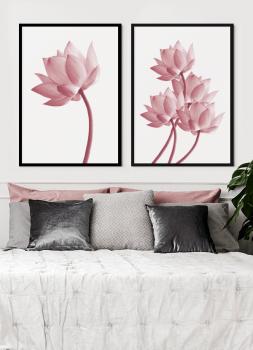 Quadros Decorativos Flor de Lótus - Composição com 2 quadros
