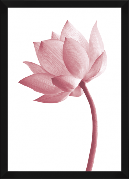 Quadro Decorativo Flor de Lótus