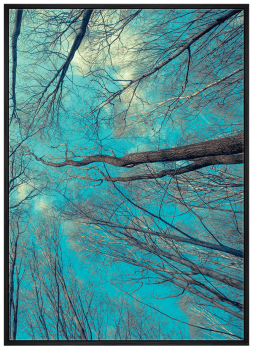 Quadro Decorativo Paisagem Árvore Céu Azul 2