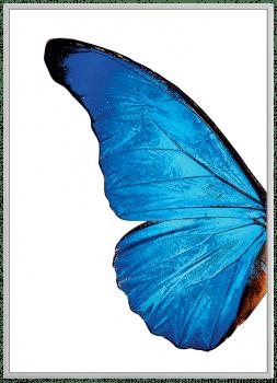 Quadro Decorativo Asas de Borboleta Azul