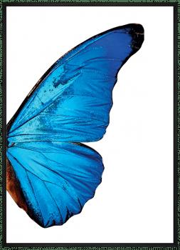 Quadro Decorativo Asas de Borboleta Azul 2