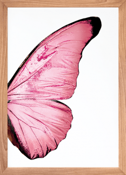 Quadro Decorativo Asas de Borboleta Rosa 2