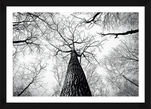 Quadro Decorativo Paisagem Árvores Luna Nera Preto e Branco