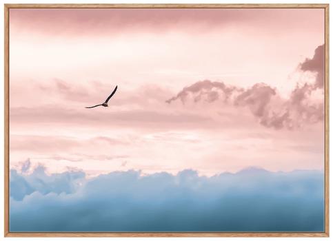 Quadro Decorativo Paisagem Céu Rosa Pássaro Fotografia