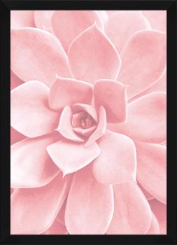 Quadro Decorativo Suculenta Rosa