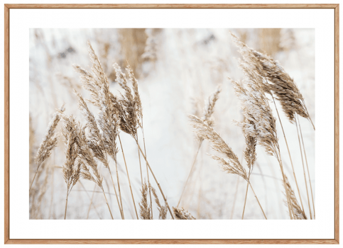 Quadro Decorativo Paisagem Trigo - Grass Flower Horizontal