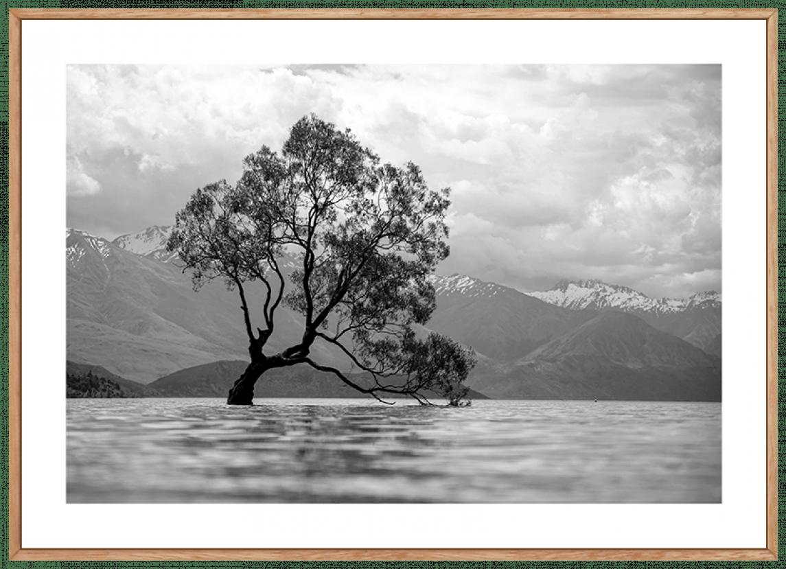 Quadro Decorativo Árvore no Lago Preto e Branco
